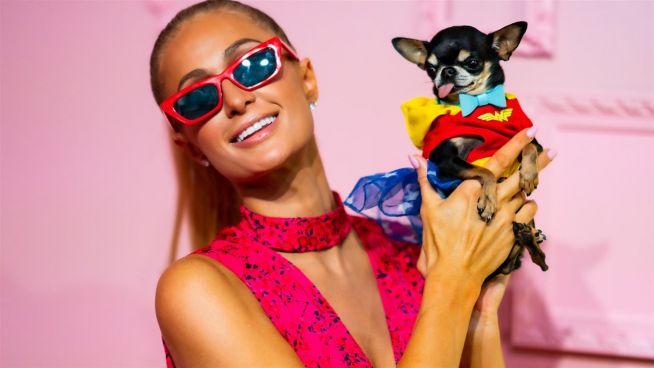 Paris Hilton mit Hund auf Fashionweek
